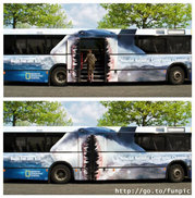 Bus_requin